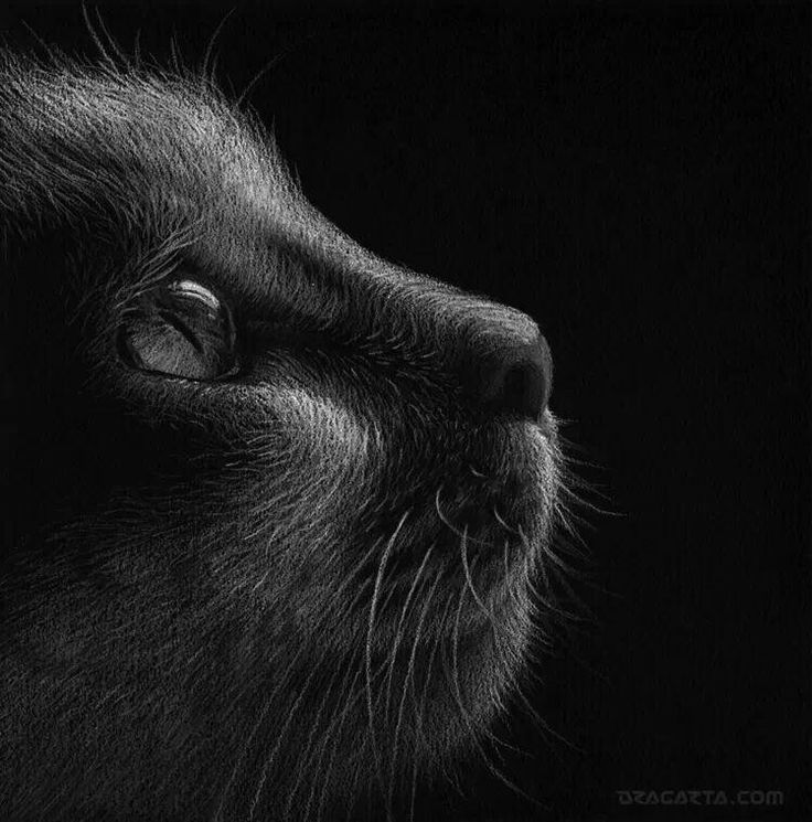 Drawn stare realistic White on pencil on pencil