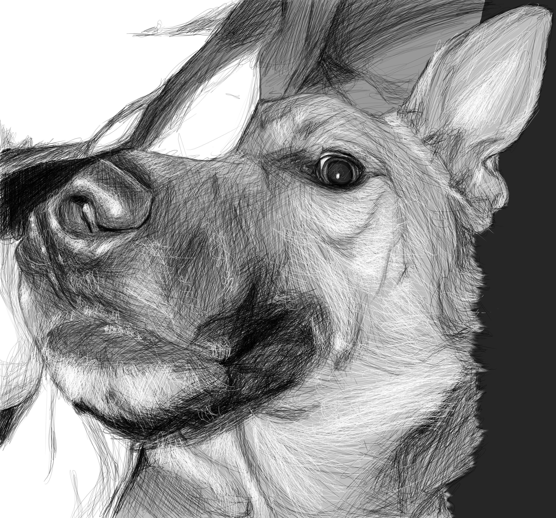 Drawn photos half Wolf Drawing girl Half half