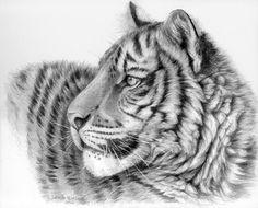 Drawn tigres profile Profile com Tiger signed deviantart