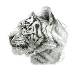 Drawn tigres profile Drawing: deviantart Tigress Drawing/Landscape sschukina