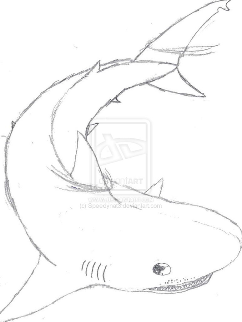 Drawn tiger shark #8