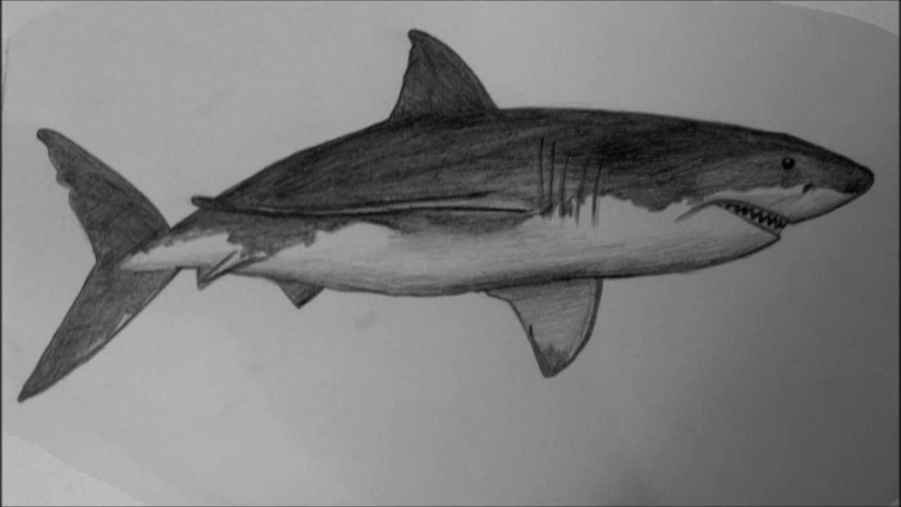 Drawn tiger shark #9
