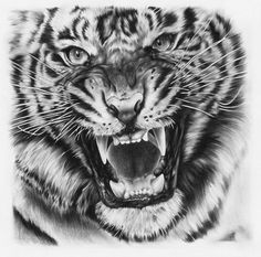 Drawn tigres Tattoo * head on one