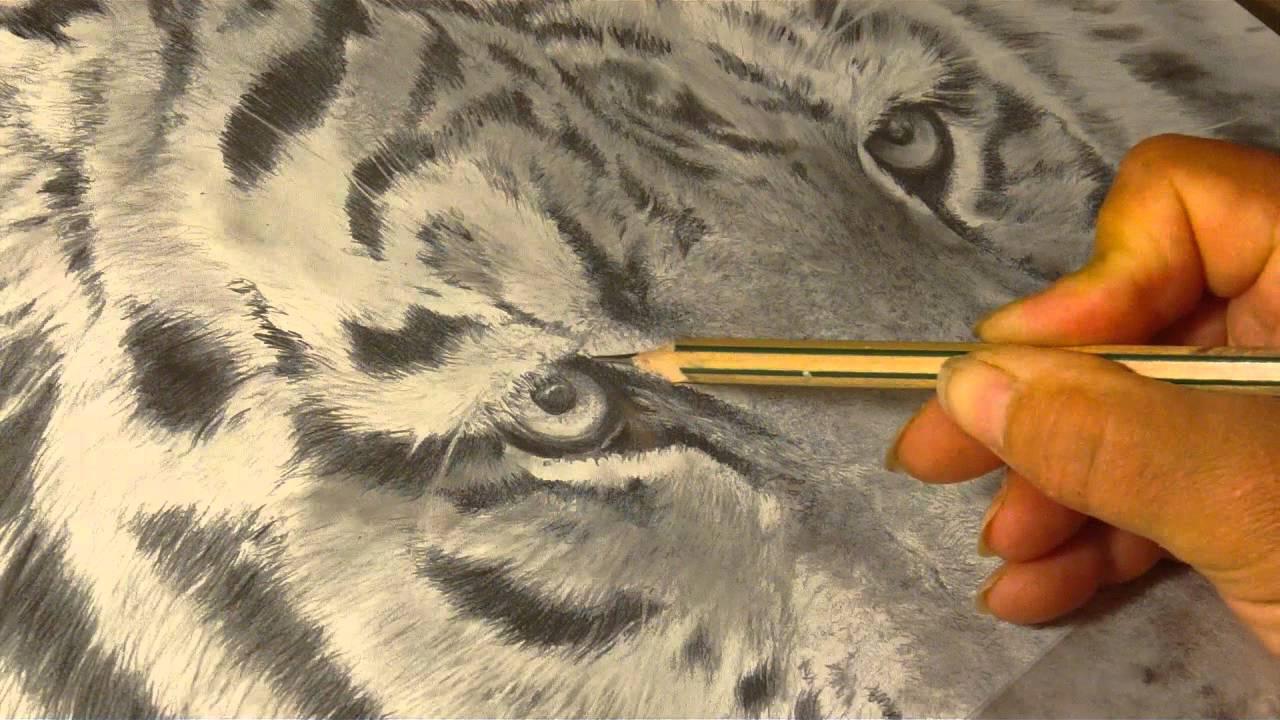 Drawn tigres portrait YouTube Dessin tigre Dessin Portrait