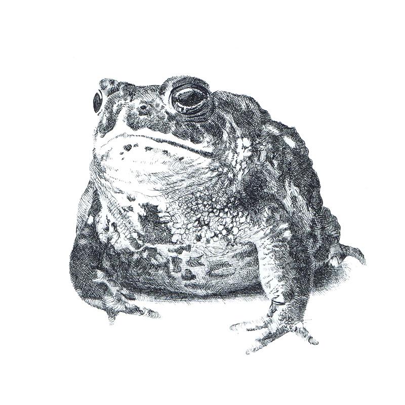 Drawn toad  drawings A series tats