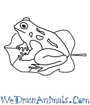 Drawn toad Draw a  How to