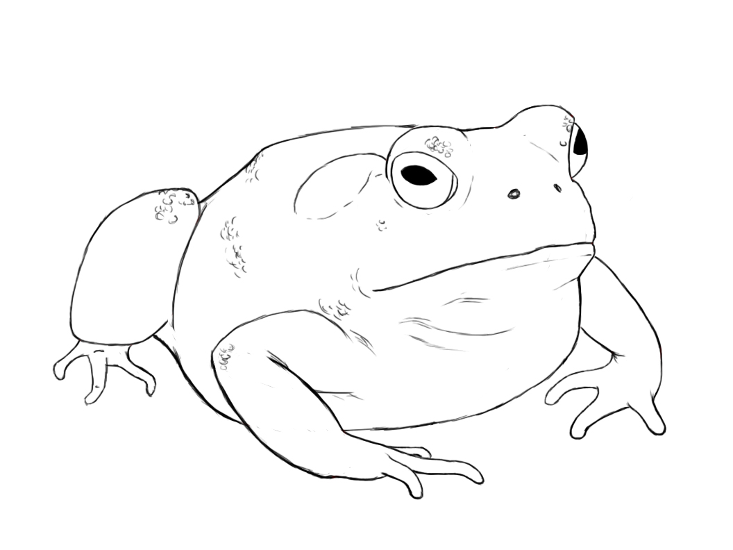 Drawn toad Draw A  Central How