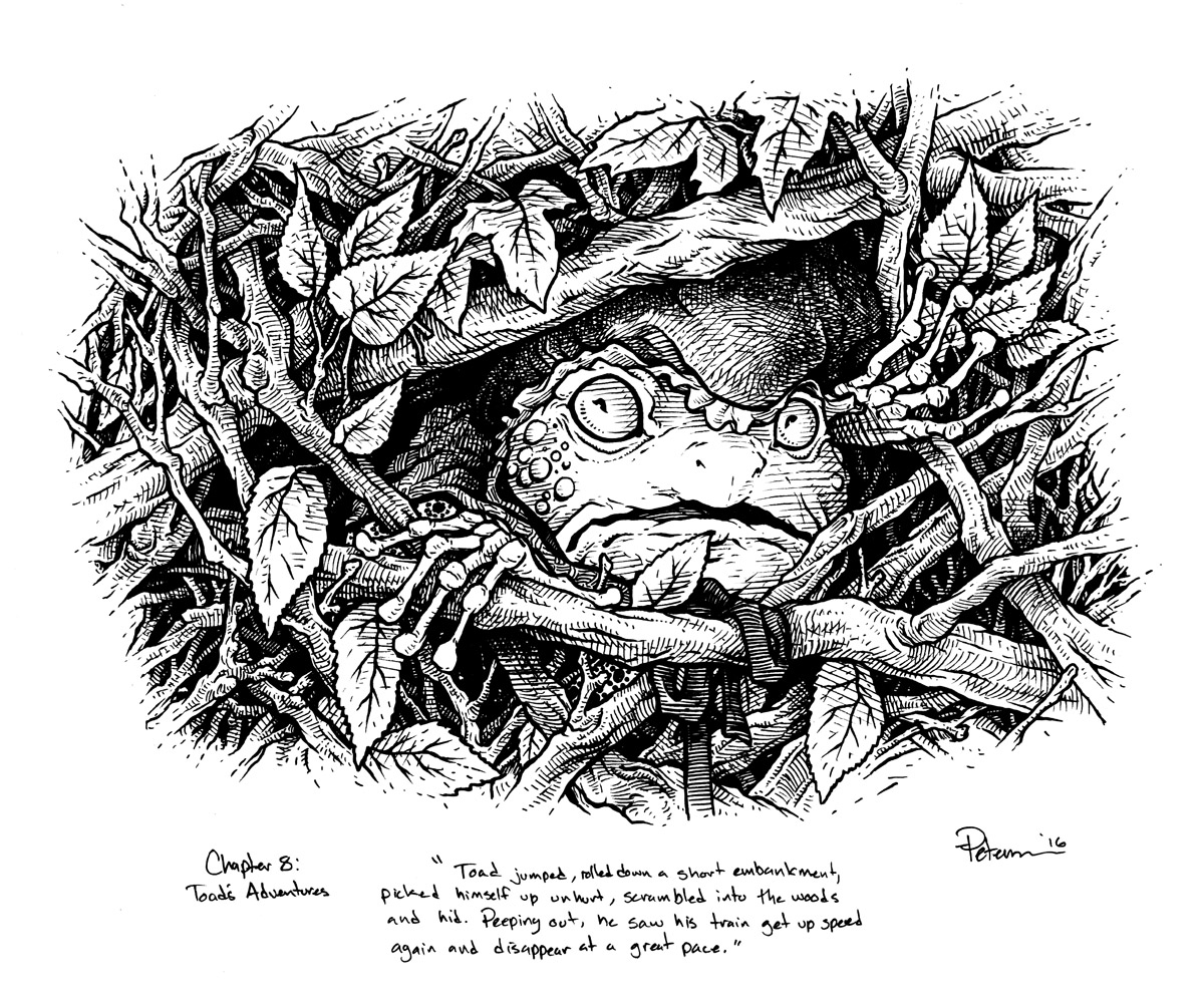 Drawn toad one point In Toad Willows: Wind Illustration