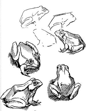 Drawn toad one point 39 Drawing Frog Fig 9