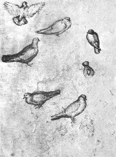 Drawn todies fast By Pisanello 1395  Pisanello