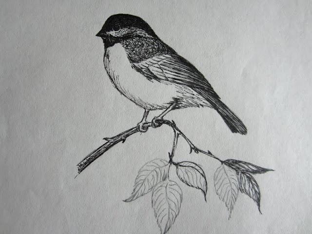 Drawn todies fast By Robins Bird 39 Birds