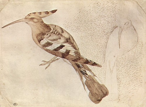Drawn todies fast Pisanello drawing Pisanello Pinterest by