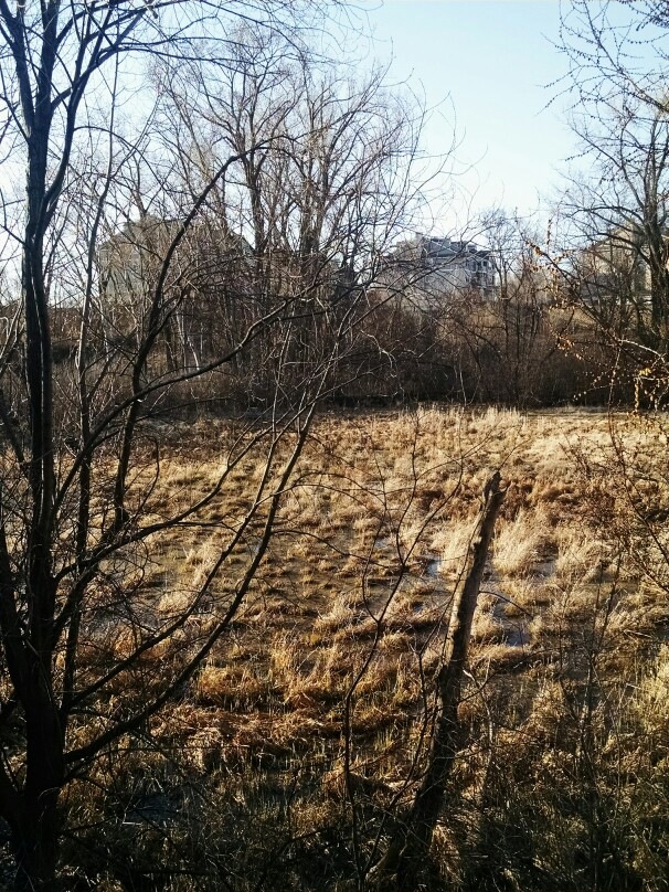 Drawn todies landscape Returns by Birds Springtime Anderson