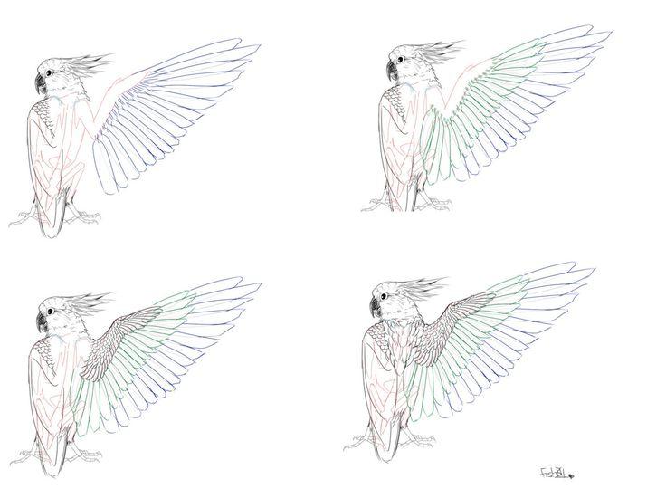 Drawn todies muscular body Bird 22 Spring Study tutorials