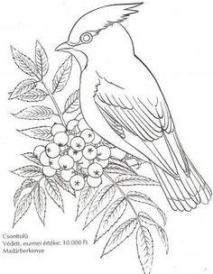 Drawn todies muscular body Madarak napja kifestő fák Környezetismeret