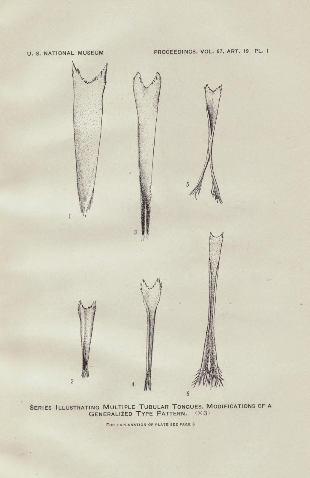 Drawn tongue finger Our Troupial Blog: (same May