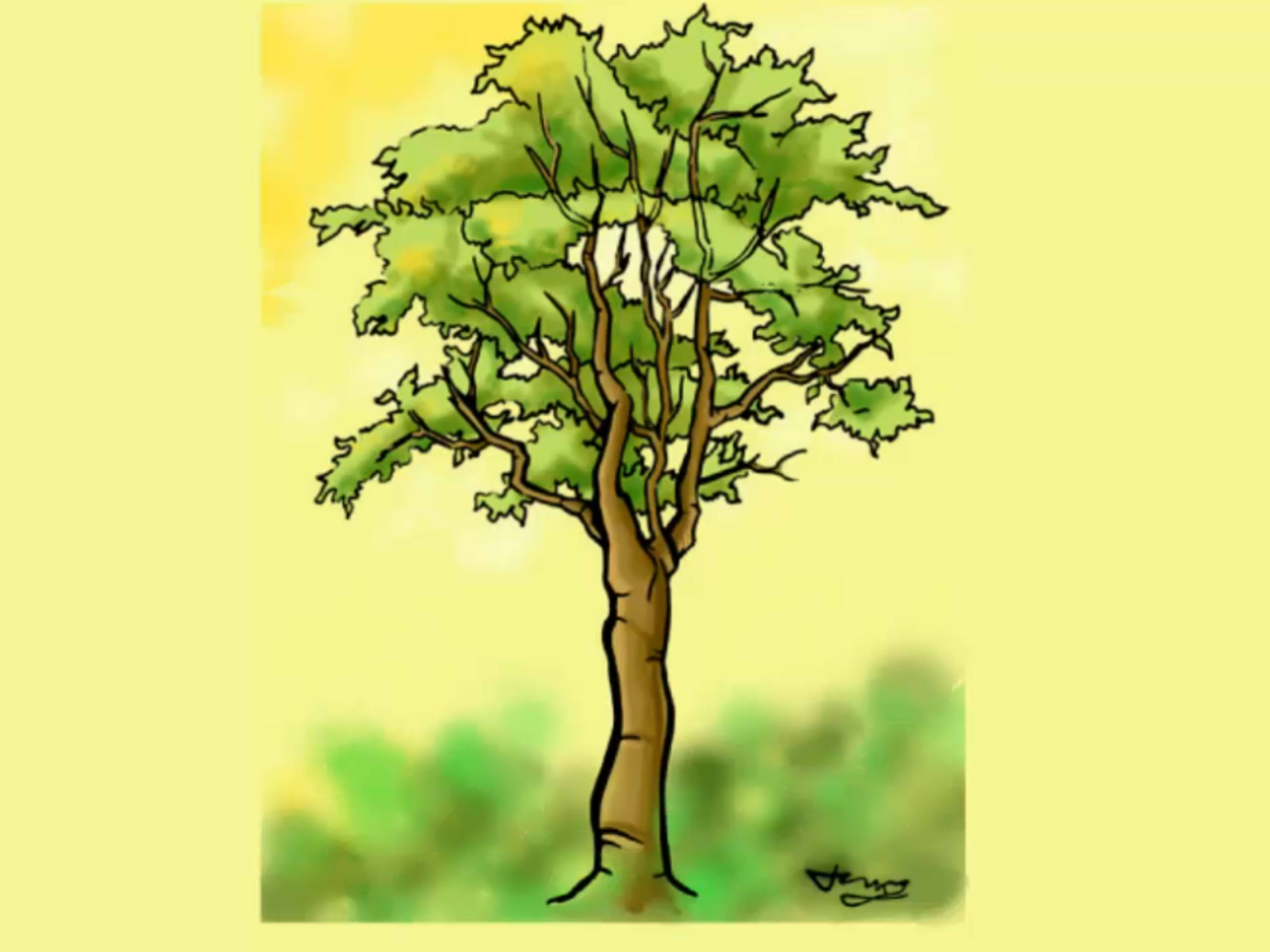 Drawn tree A (with Draw wikiHow Detailed