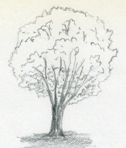 Drawn tree When draw is the into