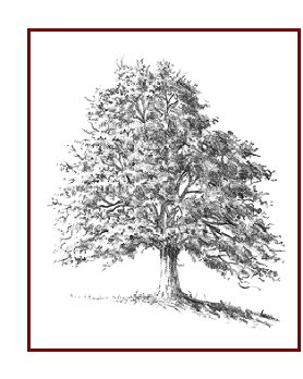 Drawn tree How and Trees to Easily