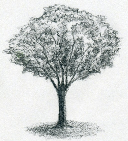 Drawn tree Enlarge And to Draw Easily