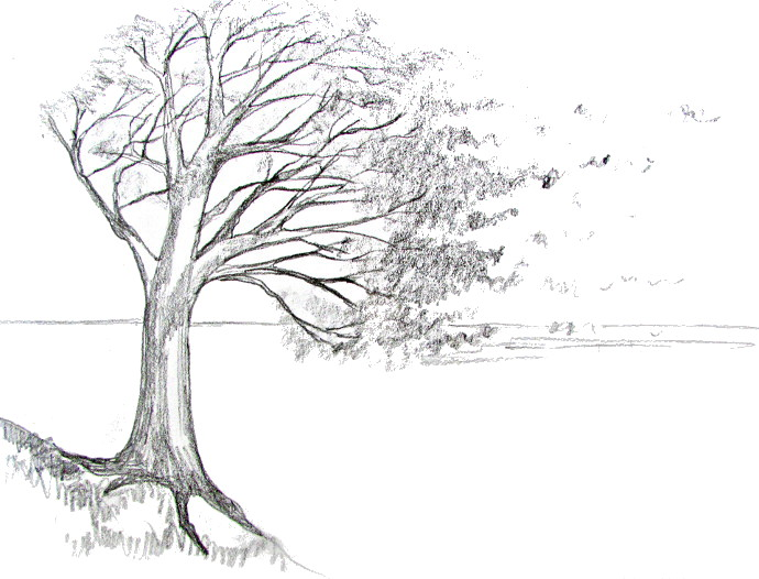 Drawn tree Tree A Art A Happy