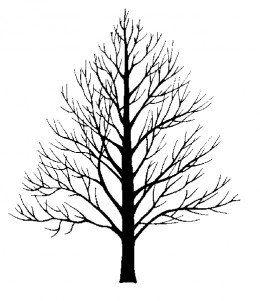 Drawn pine tree winter tree Ash Silhouette in ideas pretty
