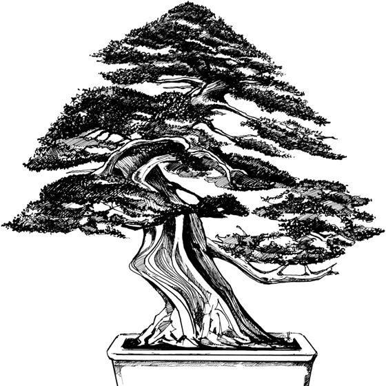 Drawn tree bonsai tree Fb on trees 28 Pinterest