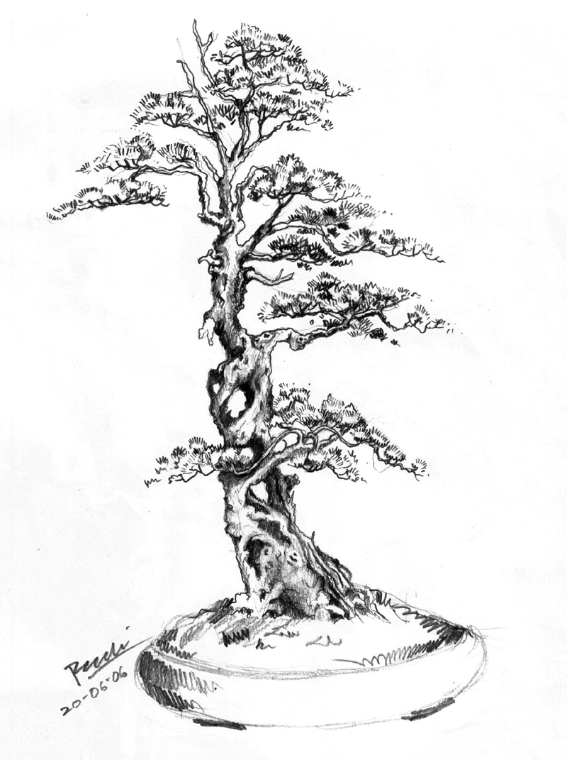 Drawn tree bonsai tree Designs designs Pictures Drawing tattoo