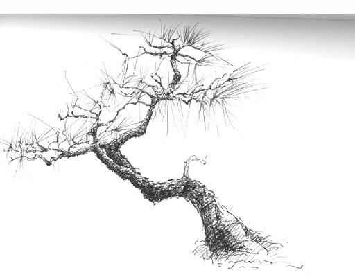 Drawn tree bonsai tree Brill Curt Bonsai Sculpture Tree
