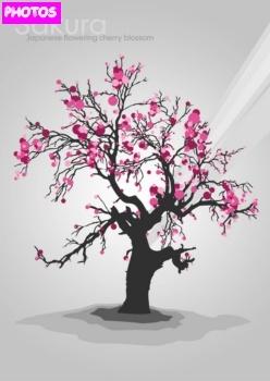 Drawn tree cherry blossom tree Pinterest Blossoms best Tree Cherry