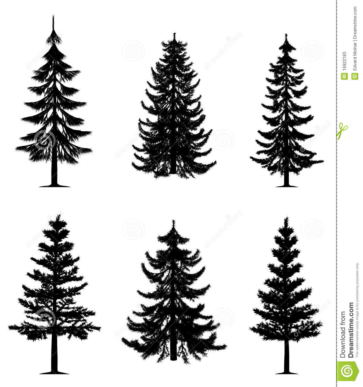 Drawn pine tree vector Photos Pine Stock clipart Conifer
