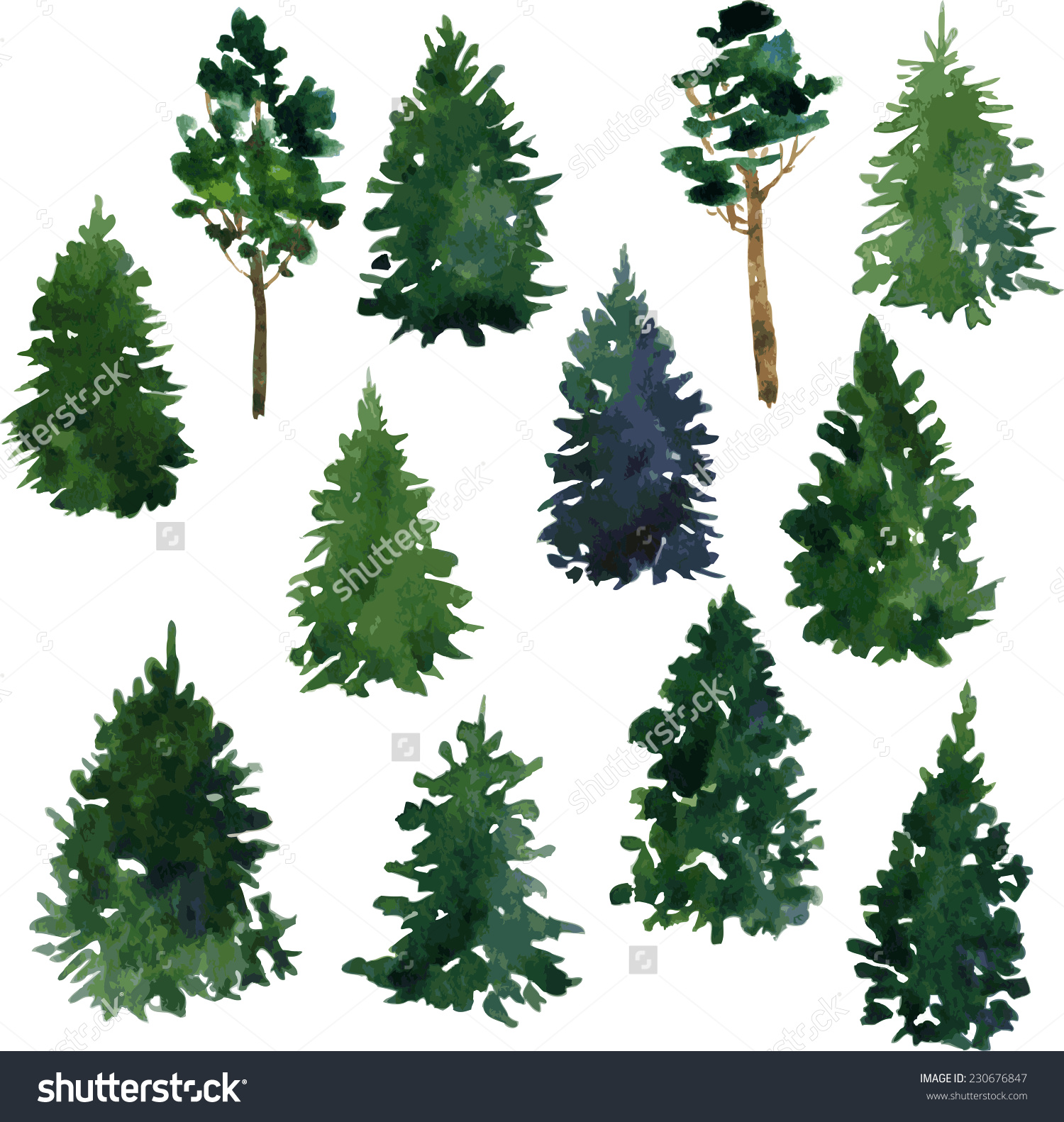 Drawn pine tree watercolor Find Set and Pin redwood
