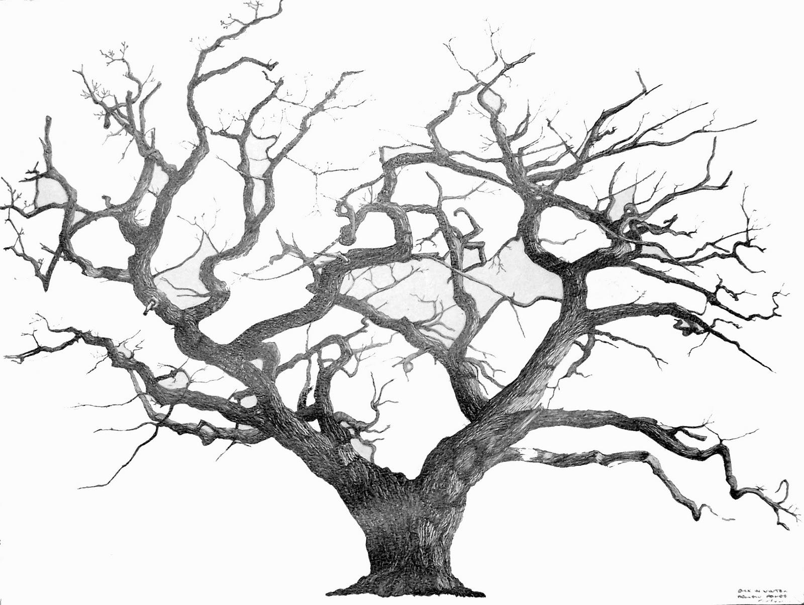 Drawn roots More! Tree Drawings Drawing Drawing