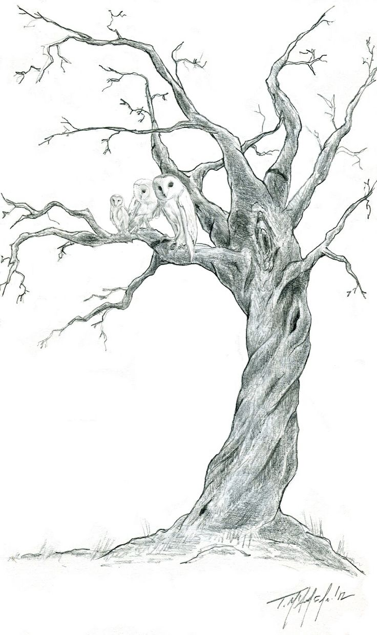 Drawn branch old dead tree #14