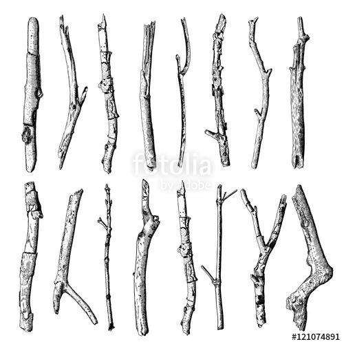 Drawn tree detailed Ink Set of of and