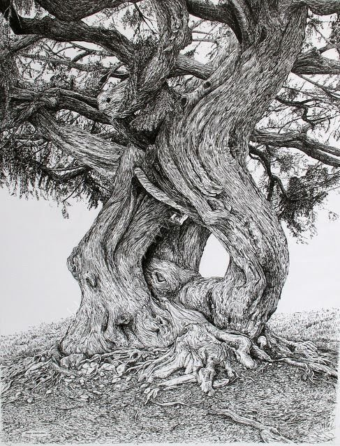 Drawn tree detailed Woolfenden's and detailed and tree
