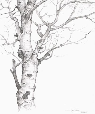 Drawn tree detailed 881 Drawing Shapes Pinterest Technique