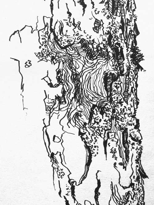 Drawn tree detailed Art drawing tree bark tree
