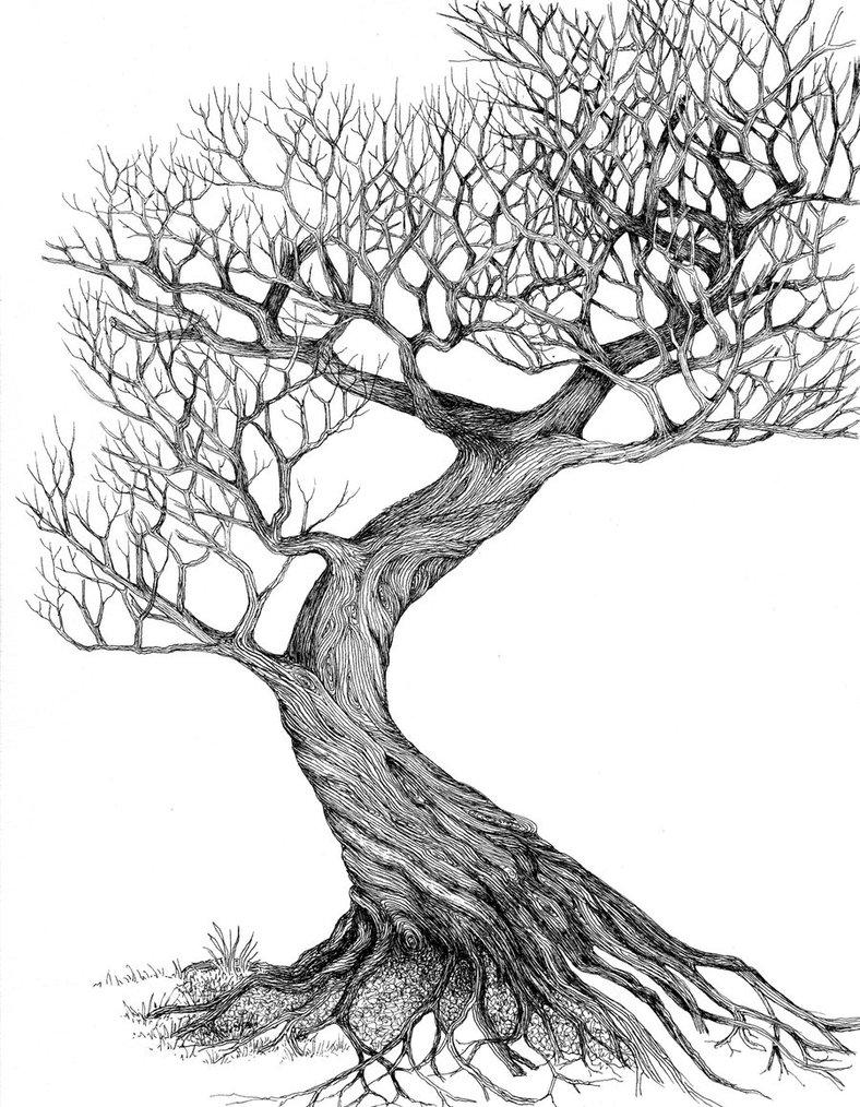 Drawn tree detailed By drawing twisting deviantART tree
