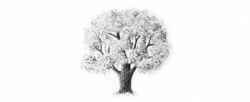 Drawn tree detailed To tree leaves Trees How