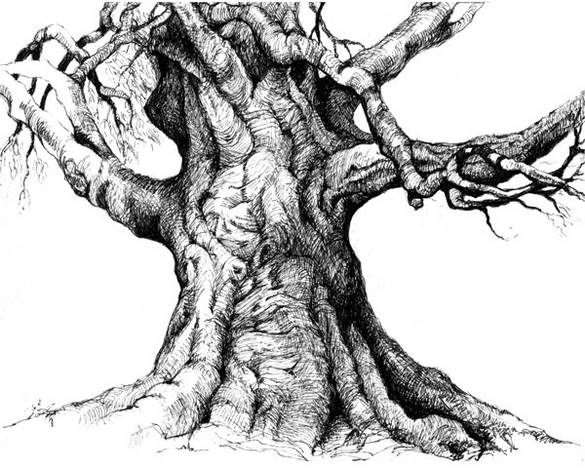 Drawn tree detailed Lost Detailed tree Trunk Drawing