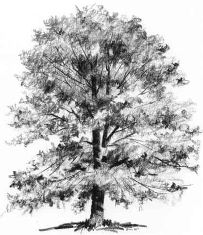Drawn tree detailed Rocks sketch Search 54 Trees