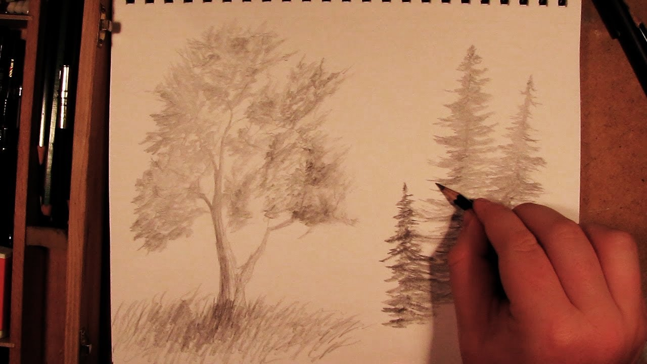 Drawn fir tree line drawing YouTube How Tree Draw to