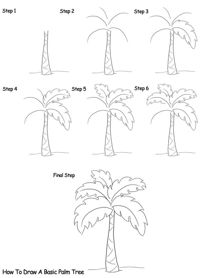 Drawn palm tree step by step #5