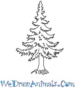 Drawn fir tree easy  Tree Fir How to