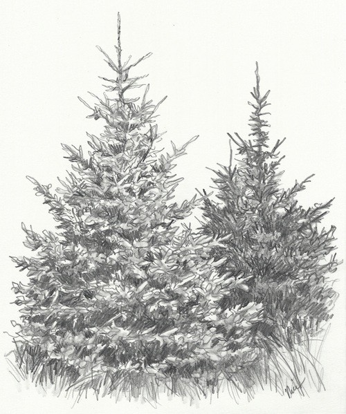 Drawn fir tree realistic Evergreen to How com Paint