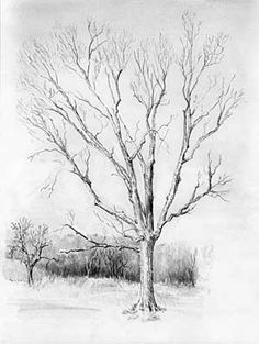 Drawn tree forest tree Question to Diane pencil How