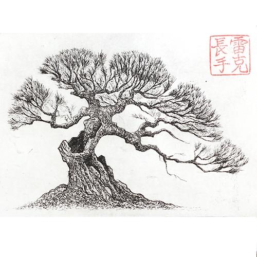 Drawn pine tree japanese Google tree Sketchbook Search drawing