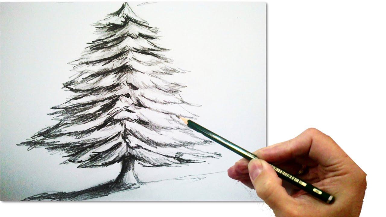 Drawn fir tree realistic Step  pencil Christmas How