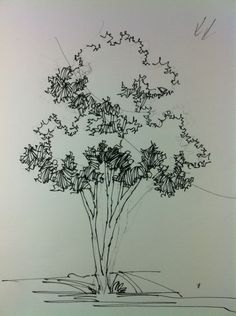 Drawn tree Images Pinterest best about 193